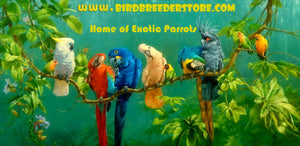 HAND-RAISED EXOTIC BIRDS FOR SALE