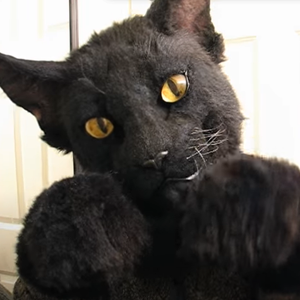 Mysterious Black cat mask