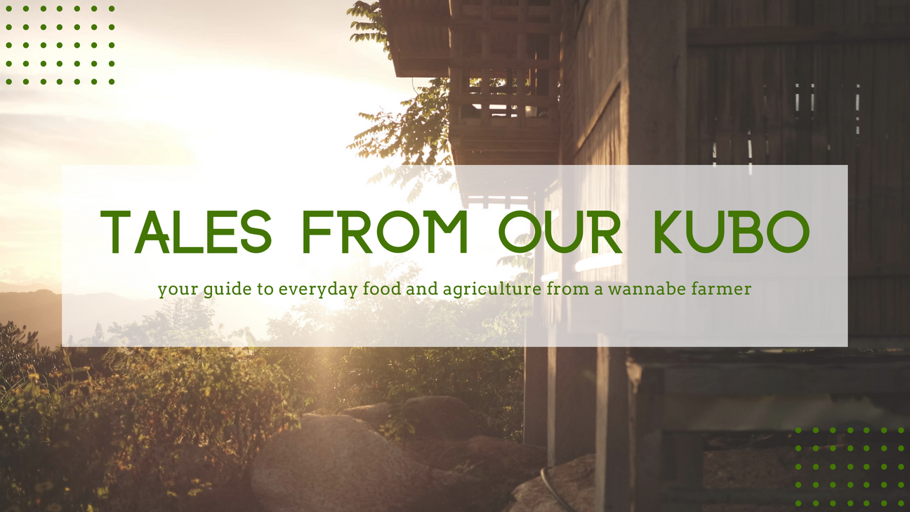Tales from our Kubo header.