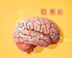 CBD and the Endocannabinoid System - How does CBD effect the body?