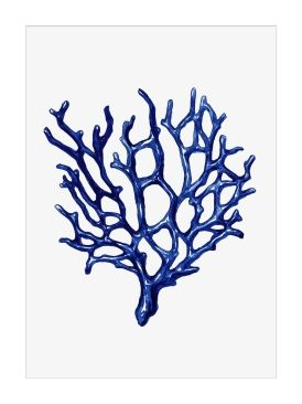 Framed Print - Blue Coral