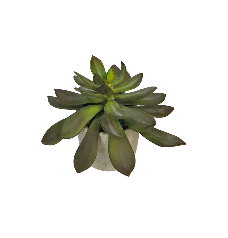 Potted Echeveria plant - Small indoor artificial plant