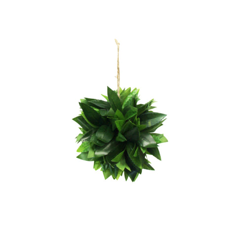 Potted Hanging Heart Leaf Philodendron