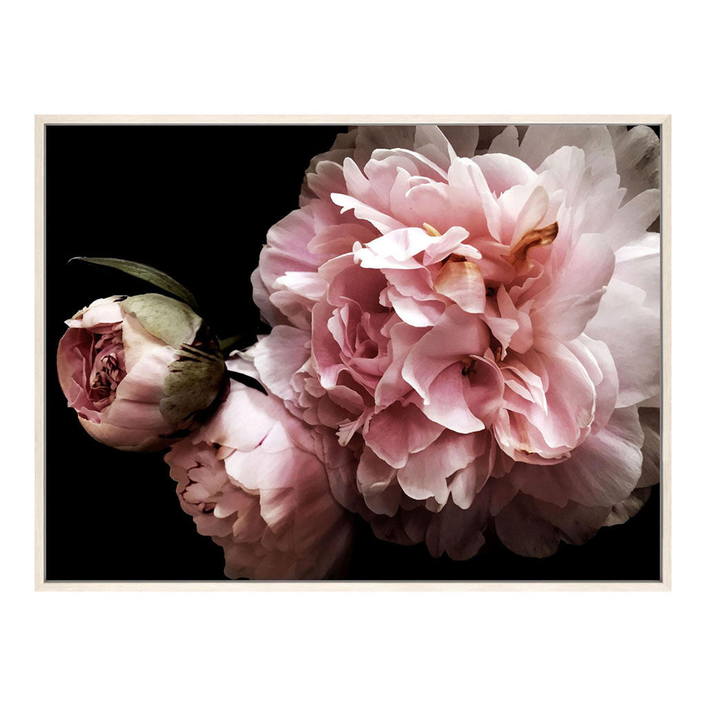 Peony wall art canvas with chalk frame