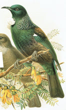 Māori Bird Lore: An Introduction