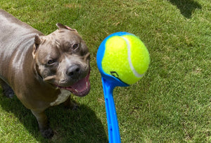 Product Review: Chuckit! Ball Launcher