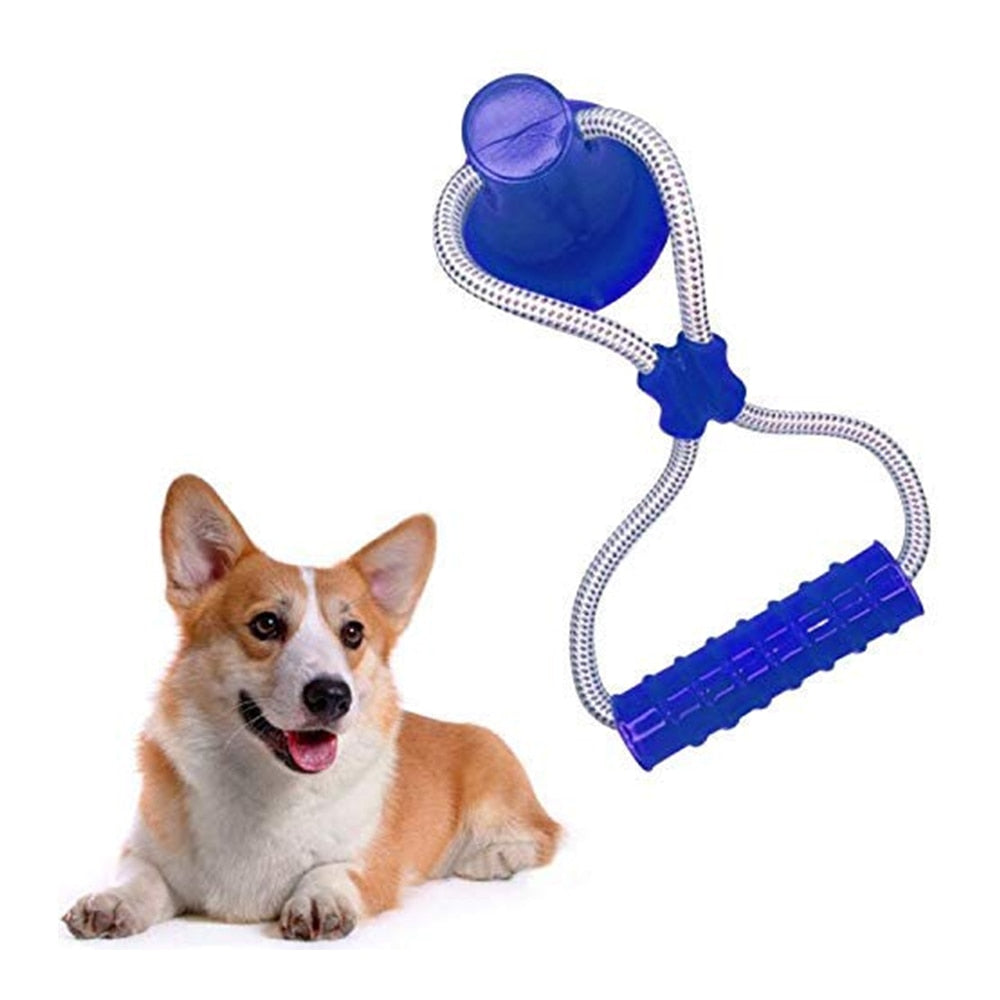 Suction Cup Interactive Molar Dog Toy