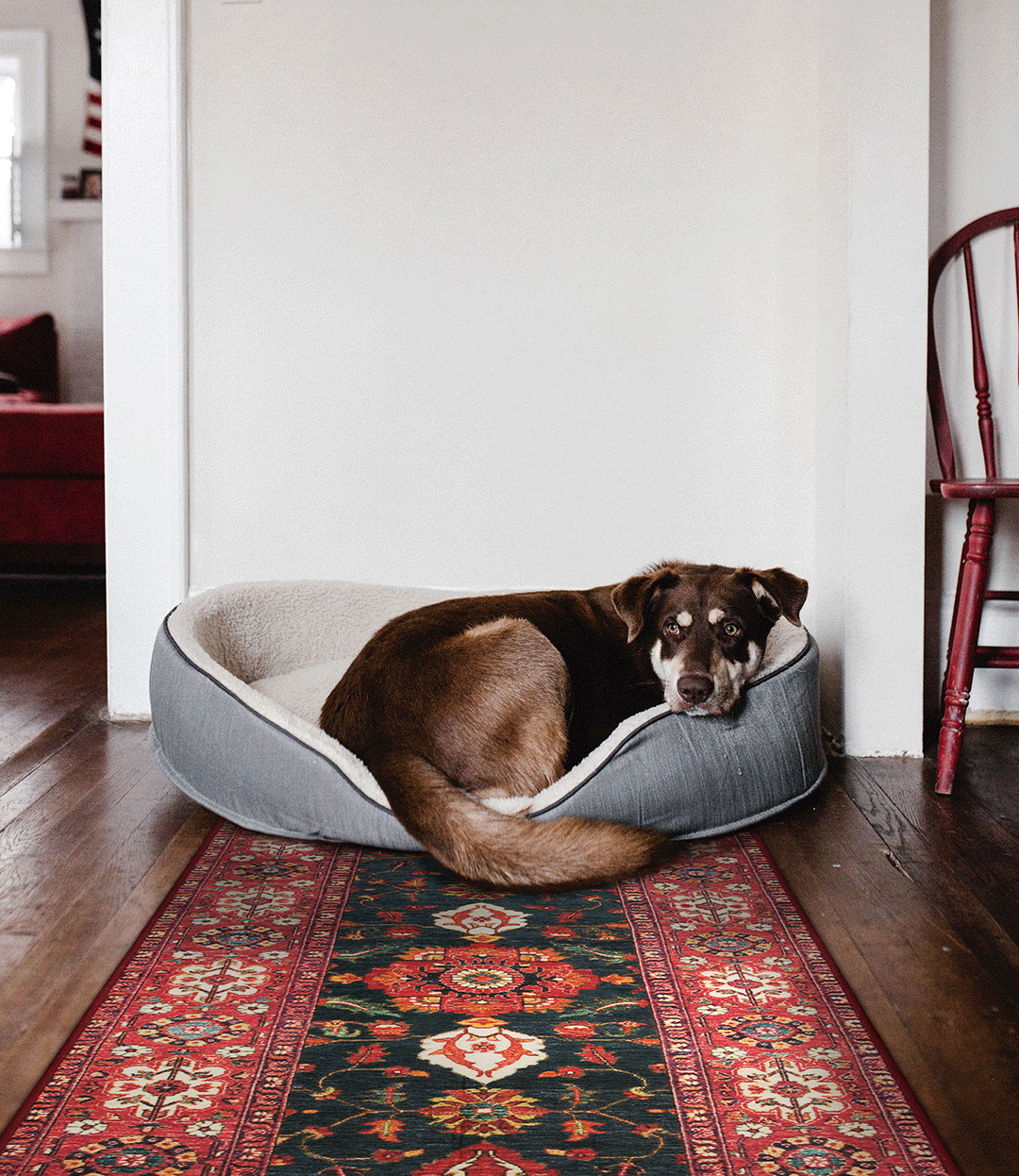 The Secret Behind My Magic Carpet's Revolutionary Rugs