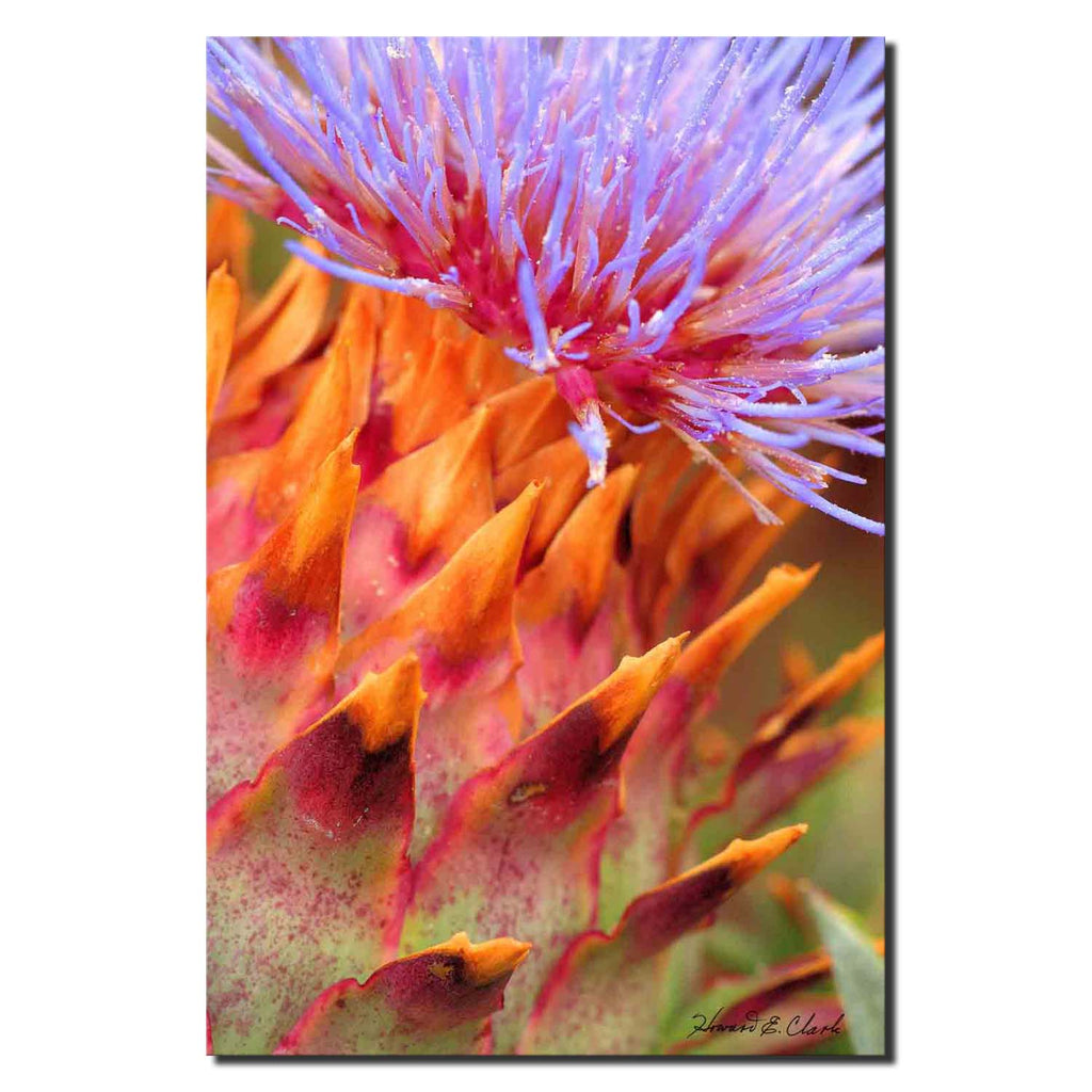 Pinecone Flower