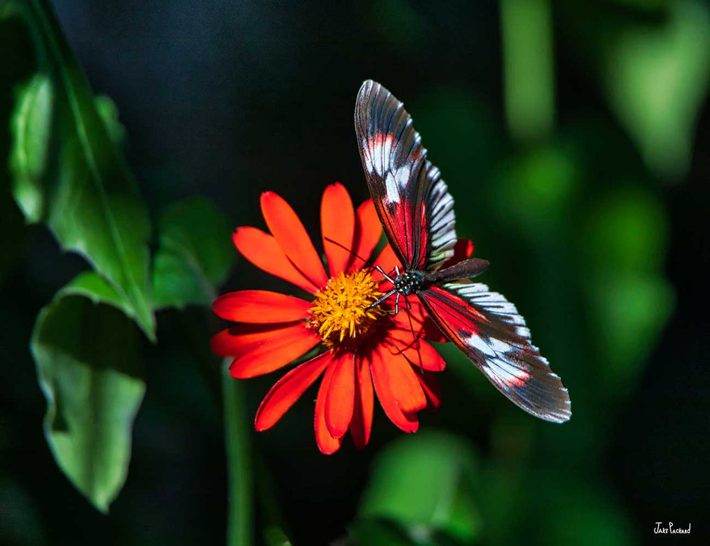 Butterfly Loving Orange Flower