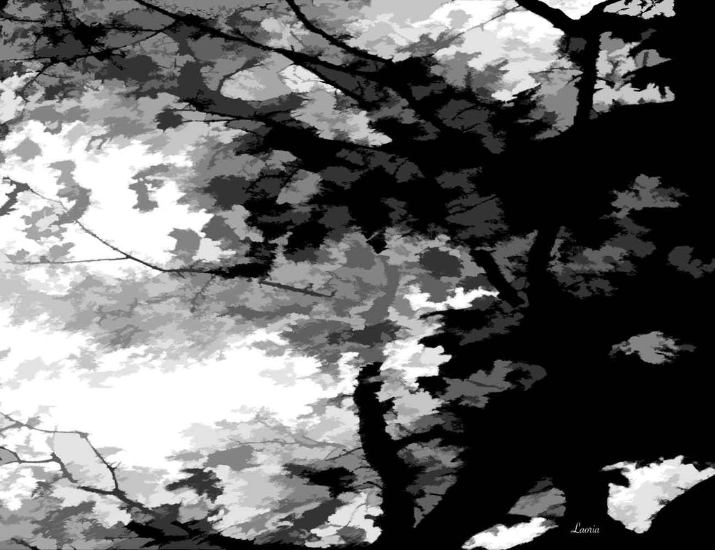 Trees Black And White