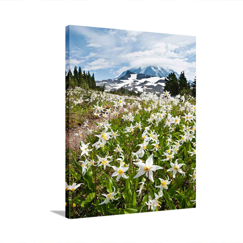 White Avalanche Lilies in Mount Rainier National Park