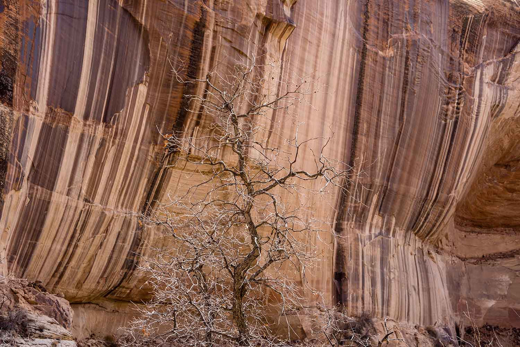 Desert Varnish in Grand Staircase-Escalante National Monument