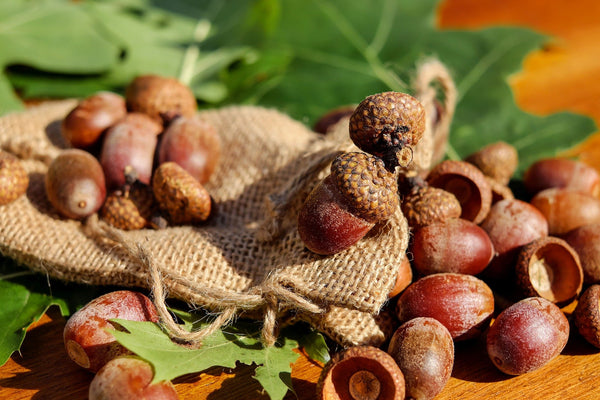 Natural Acorns, Craft Essentials, Well at Home