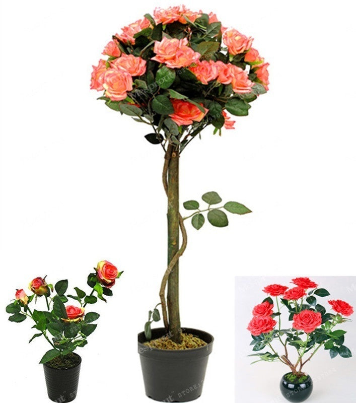 100pcs Rose Tree Aromatic Pleasant-Smelling Fragrant Bonsai Tree Flower Seed rose tree plant Balcony&Yard potted for home garden