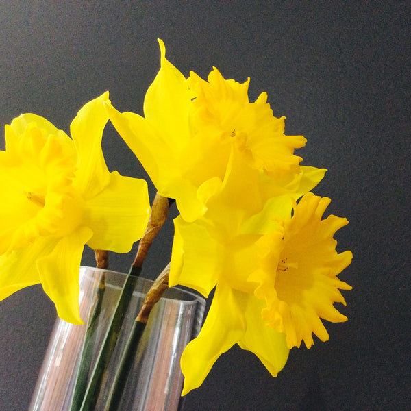 Flower of the Month // July // Daffodil