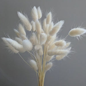 White Bunny Tail Grass