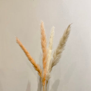 Mini Pampas Grass