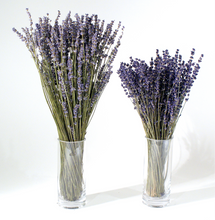 Load image into Gallery viewer, Dried Lavender Bouquet