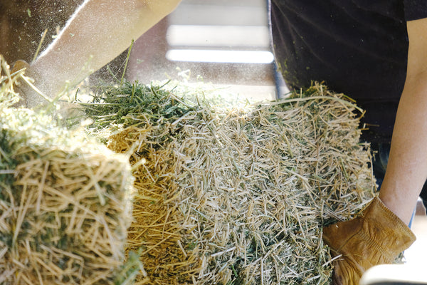 Natural alfalfa hay is an important part of a rabbit's diet