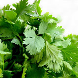Cilantro (3 Bunch)