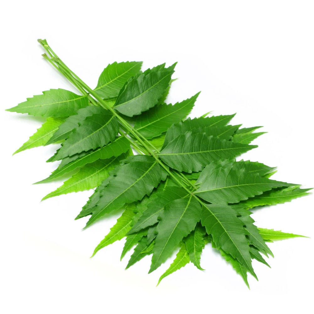 Neem Leaves (1 Pkt)