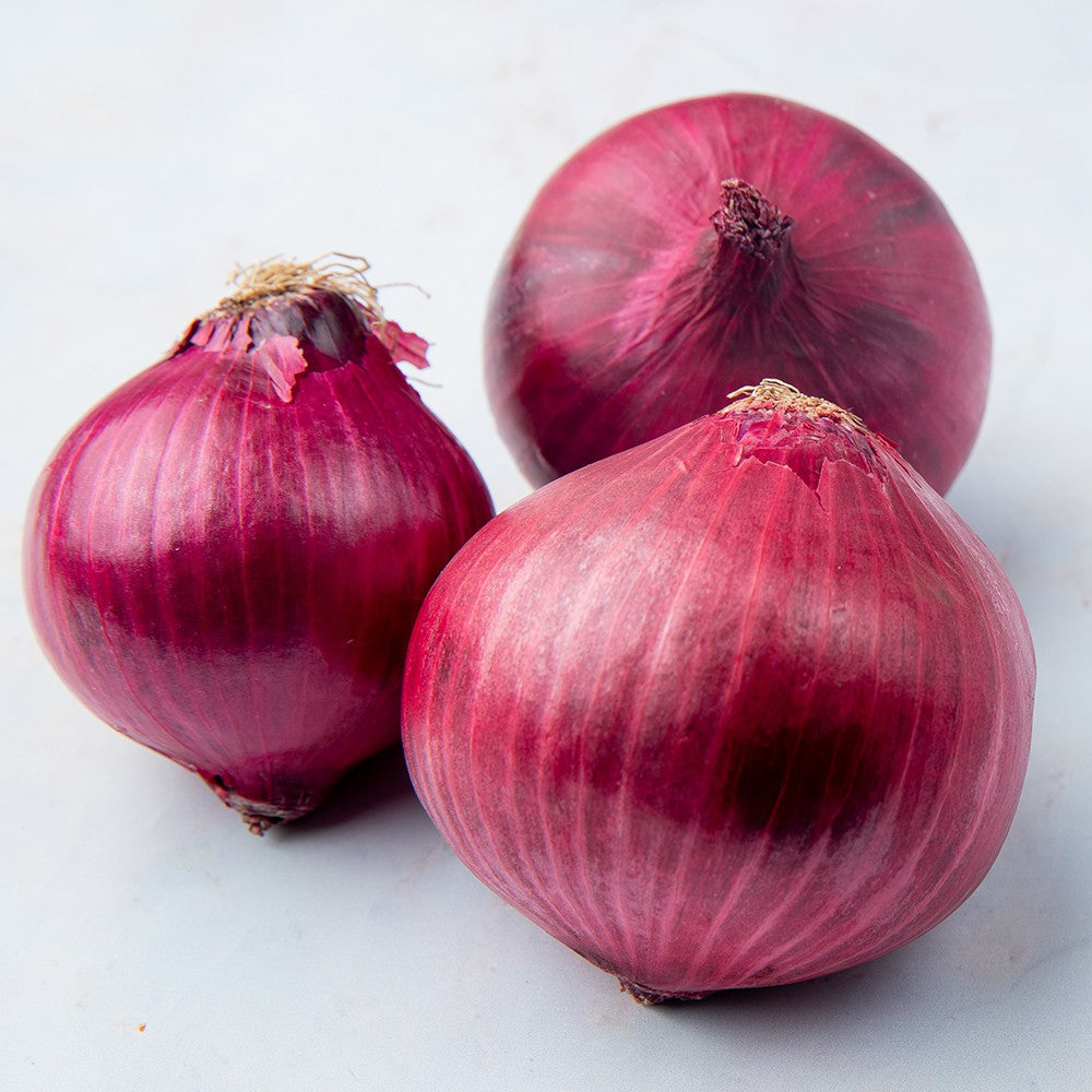 Onion Red (1.0 lb)