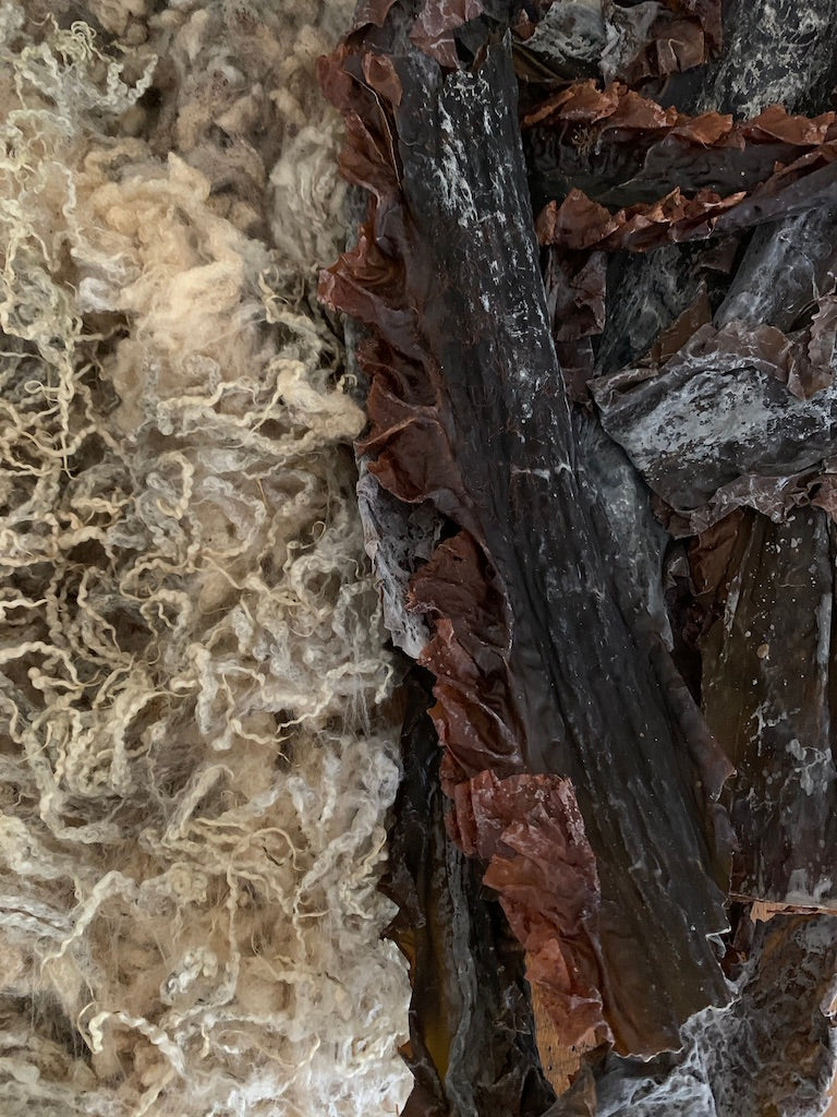 Image of dried wild sugarkelp seaweed and greasy bluefaced leicester fleece
