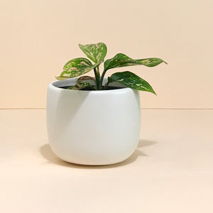 White Ceramic Pot 95mm