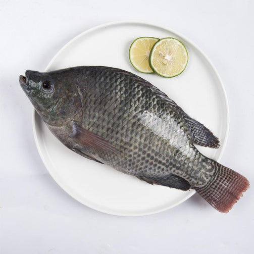 Picture of Tilapia Fish (Various Sizes)
