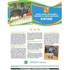 4-H Animal Care & Well-Being Poster - Swine