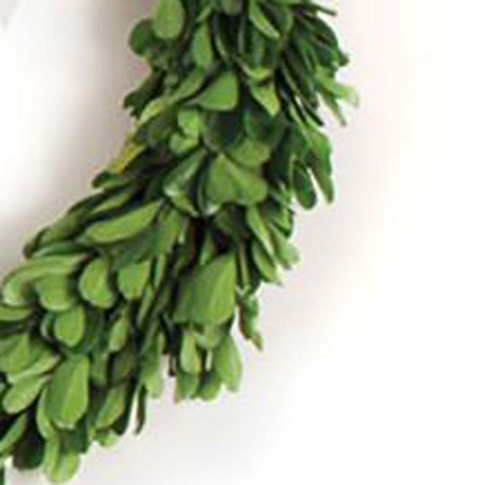 Preserved Boxwood Wreaths with Ribbons