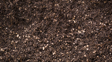 Fall Soil Recommendations