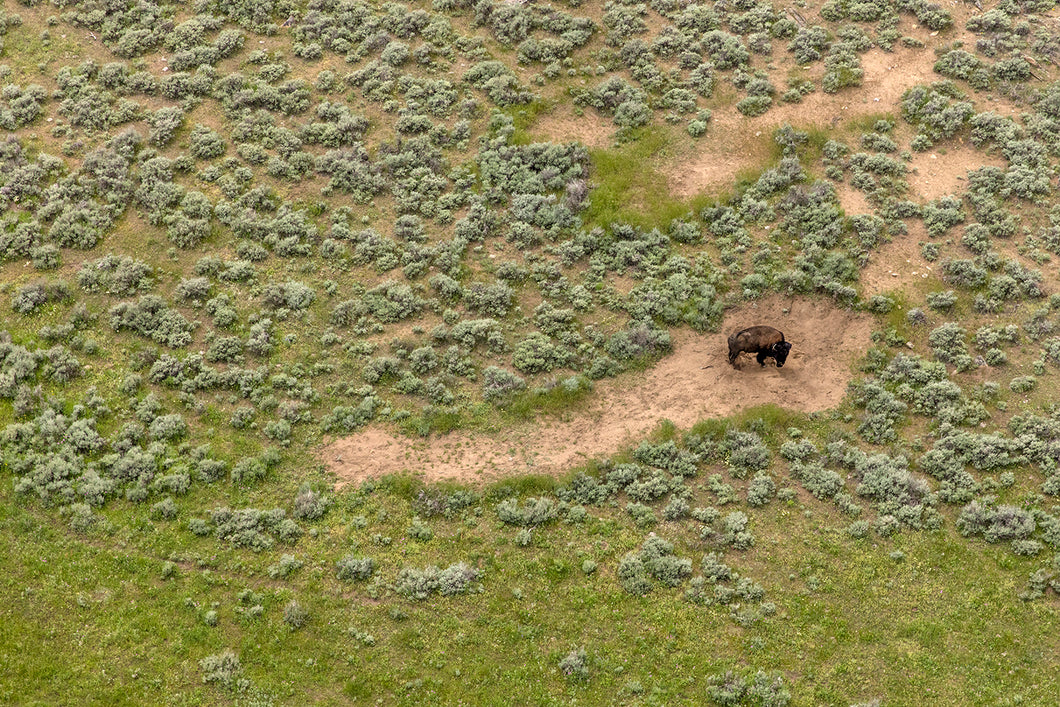 Bison's Wallow, 2015