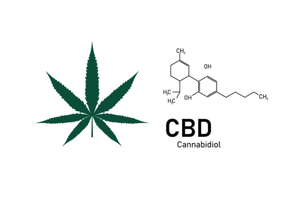 Hemp Oil vs. CBD Oil: Same Family, Different Healing
