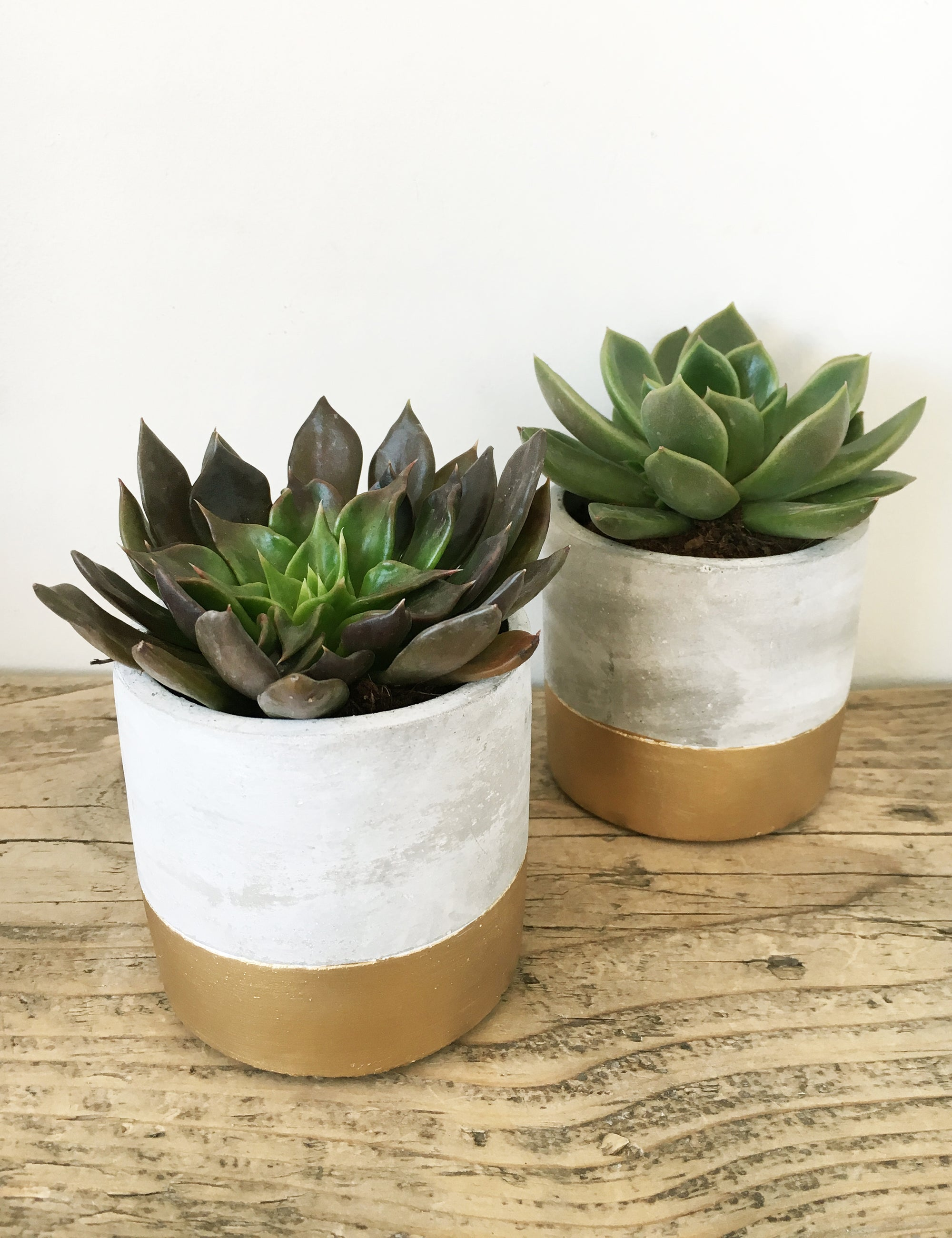 Concrete Gold Dipped Planter