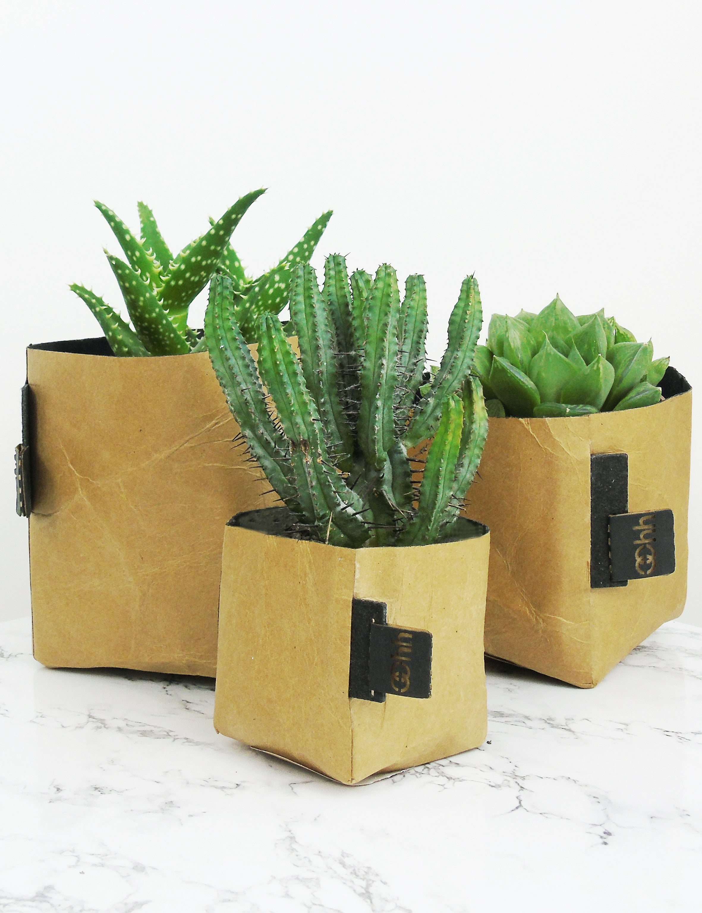 Creased Paper Planters
