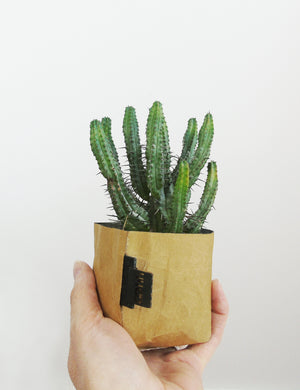 Creased Paper Planter - Small