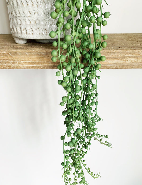 Faux String of Pearls Plant