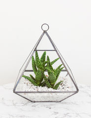 Glass Pyramid Terrarium | The Den & Now