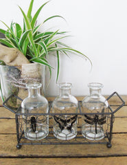 Illustrated Insect Bottles | The Den & Now