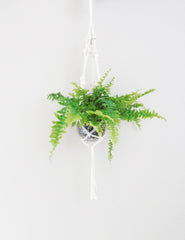 Macrame Hanging Planter | Buy Stylish Homeware | The Den & Now