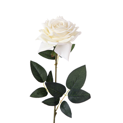Velvet Emperor Rose Single Stem - 72cm length (Ivory)