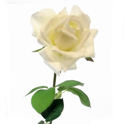 Real Touch Large Open Rose - 75cm (Ivory)