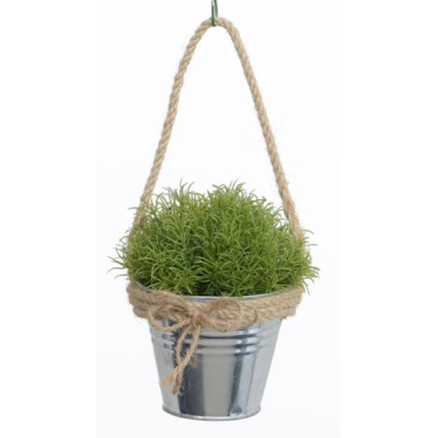Asparagus Grass with Metal Pot - 15cm