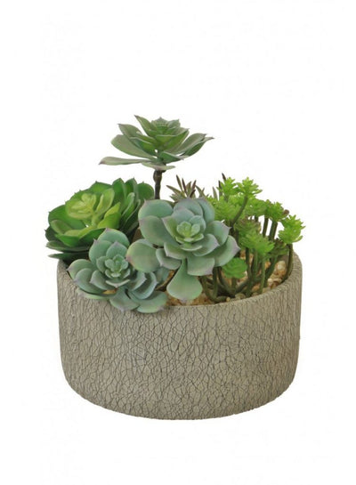 Natural Green Succulent Arrangement - 24cm