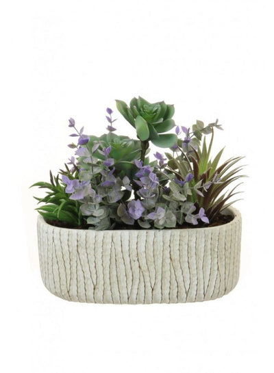 Natural Green Succulent Arrangement - 23cm