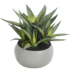 Aloe in Ceramic Pot - 30cm