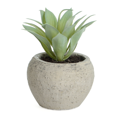 Succulent in Pot - 13cm