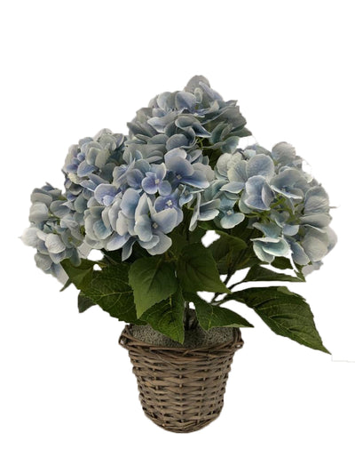 Hydrangea Bush in Wicker Basket - 52cm (Blue)